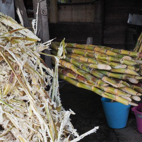 Pressage de la canne à sucre